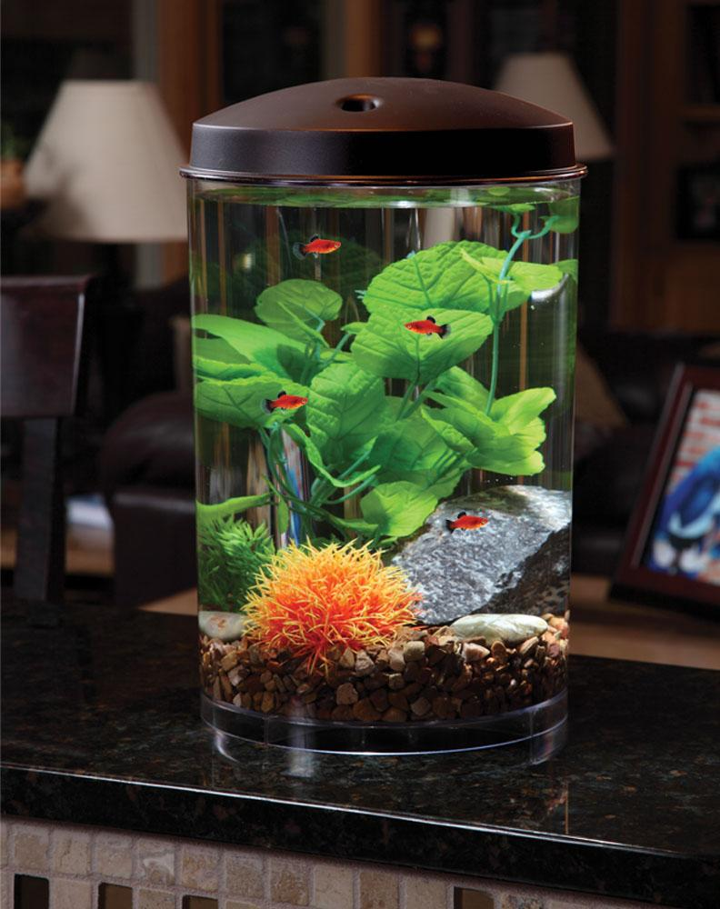 Kollercraft 3 gallon 360 view aquarium with for 10 fish in a tank riddle
