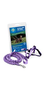 cat, leash, collar, walk, safety