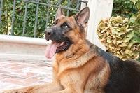 Elite Bark Control; No Bark; Anti-Bark