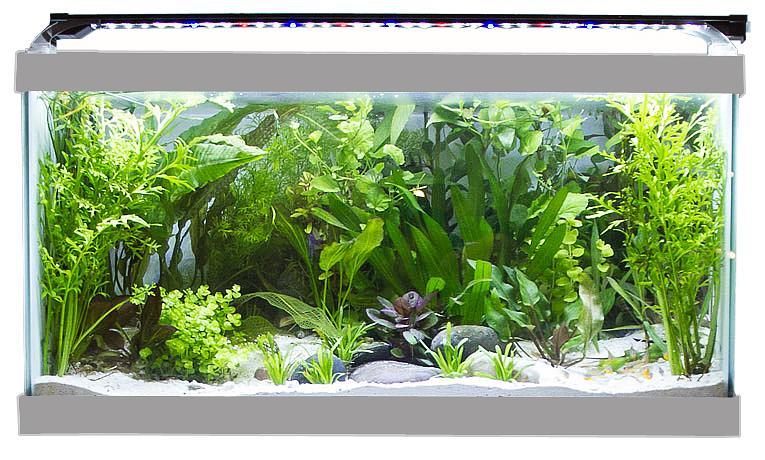 Plant Supporting LED  sc 1 st  Amazon.com & Amazon.com : Finnex Stingray Aquarium LED Light 36-Inch : Pet ... azcodes.com