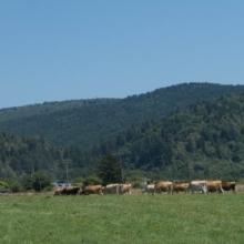 small family farms