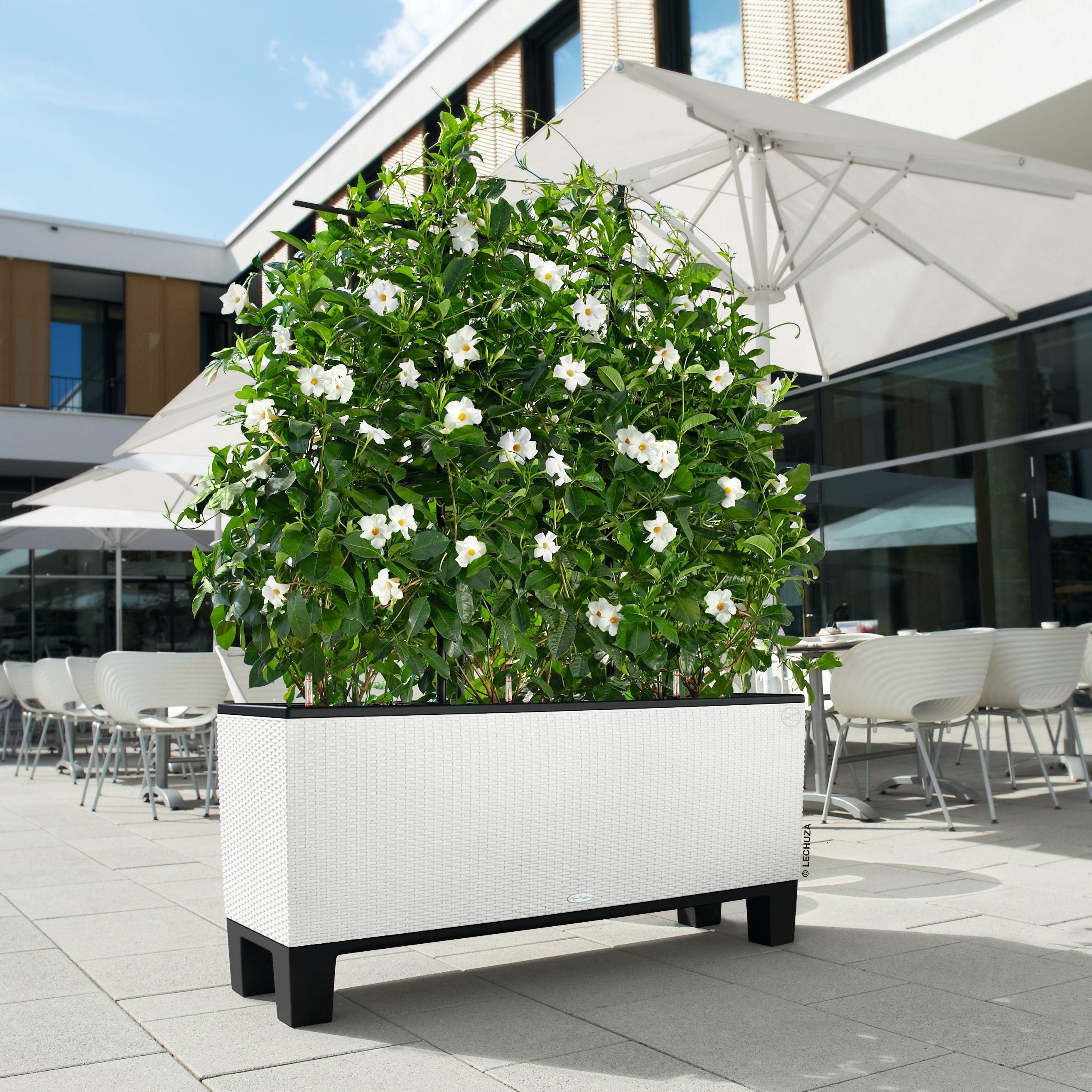 lechuza trio cottage 40 planter white wicker. Black Bedroom Furniture Sets. Home Design Ideas