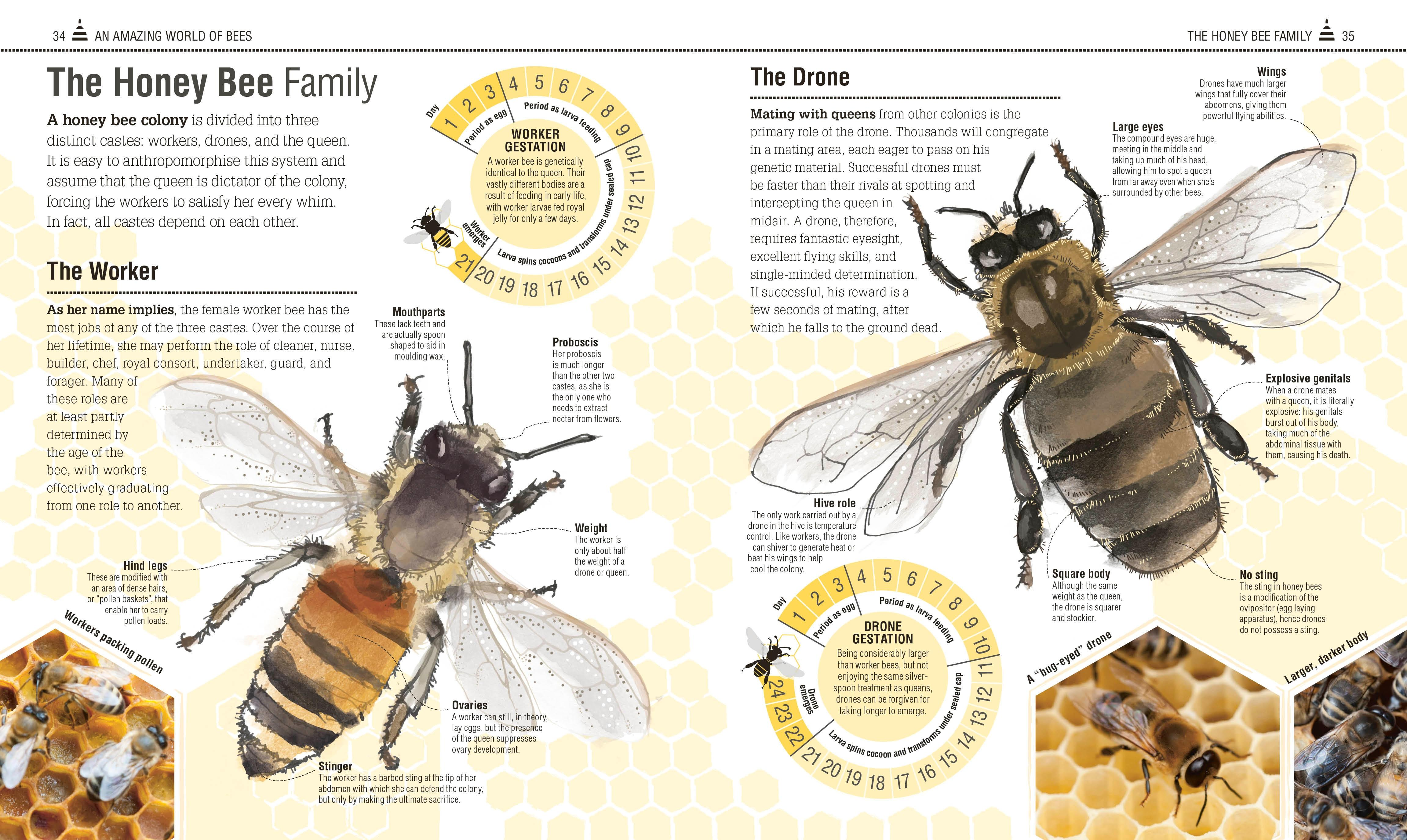 the bee book dk emma tennant fergus chadwick 9781465443830