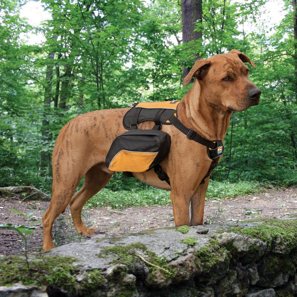 Amazon.com : Kurgo Wander Dog Backpack : Pet Backpacks : Pet Supplies
