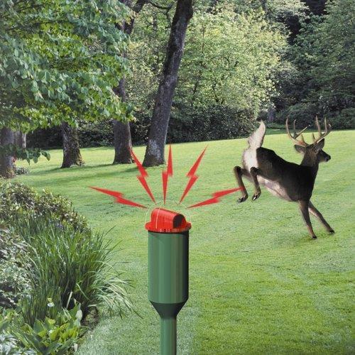 Amazoncom Havahart 5250 Electronic Deer Repellent Home Pest