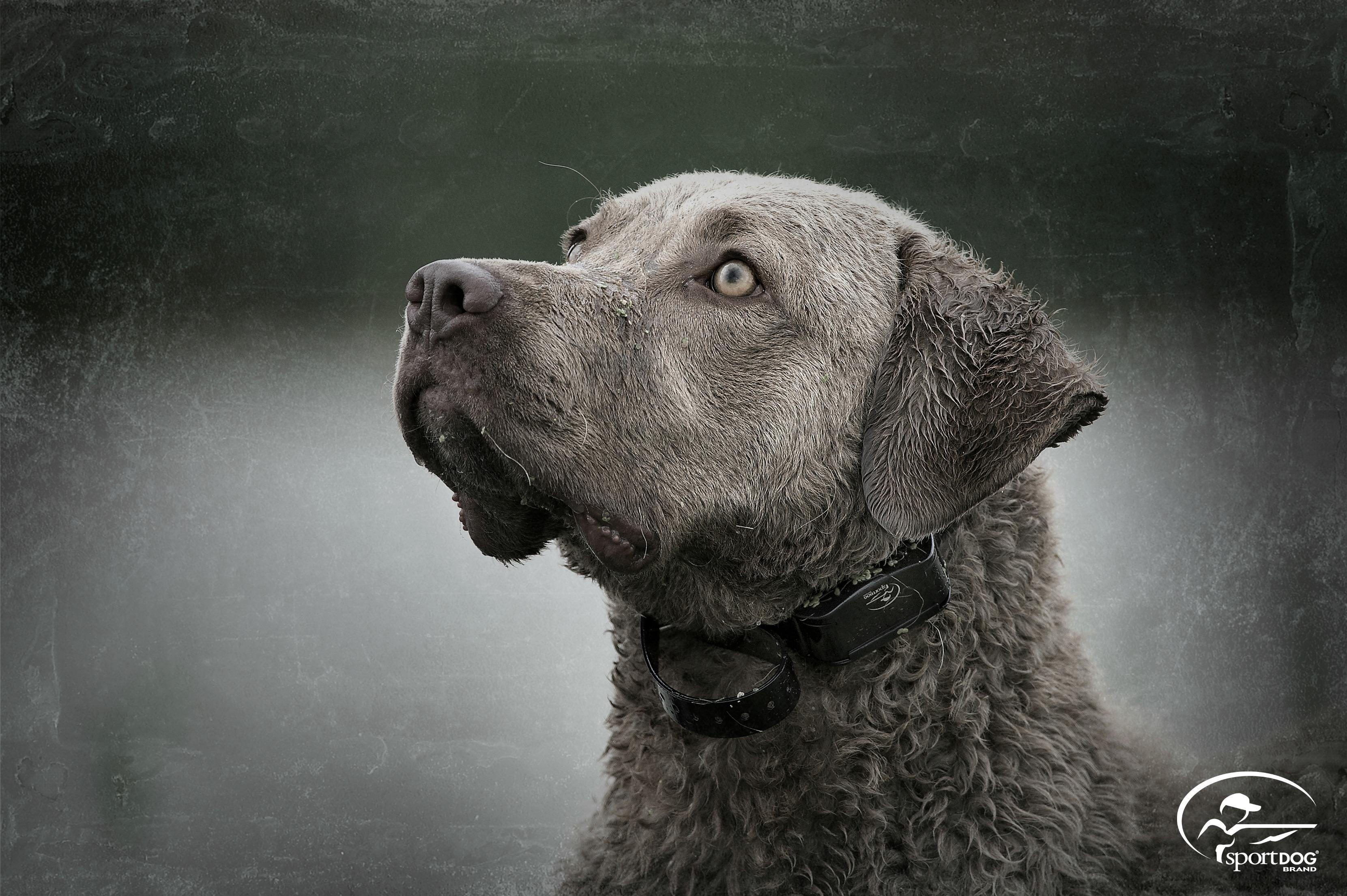 Q Dog Brand Amazon.com : Sp...