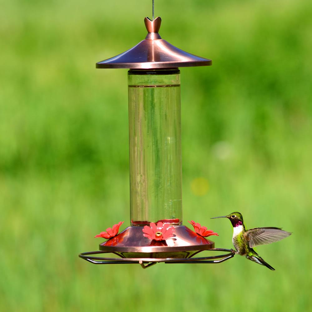 plastic perky bf pet the master grand us hummingbird feeder humingbird
