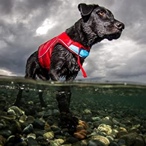 Keeps your dog safe in the water and warm on the land.