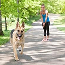 come back dog listen training