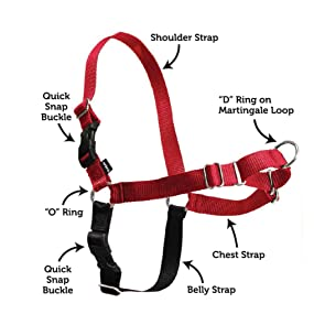Amazon.com : PetSafe Easy Walk Harness, Small/Medium, RED/BLACK for