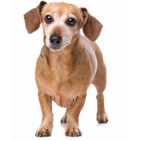 small breed senior dog food,senior small breed dog food,senior dog food small breed