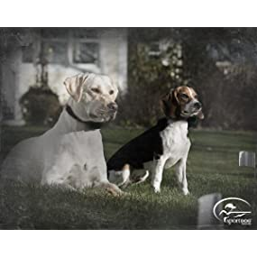 SportDOG Brand, In-Ground Fence, electric fence,