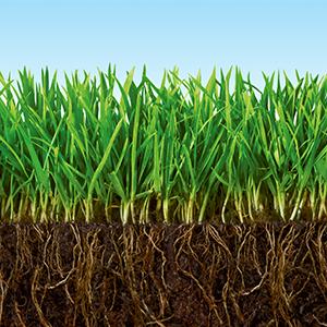 Amazon Com Scotts Turf Builder Lawn Food Summerguard