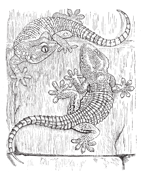 The o 39 reilly animals an adult coloring book Coloring book for adults amazon