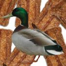 Amazon.com : Plato Dog Treats - Natural Duck Flavor- Chewy