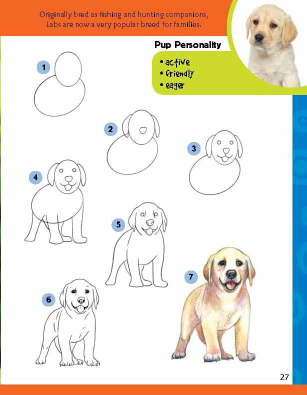 Learn To Draw Dogs Puppies Robbin Cuddy 0050283524021 Amazon