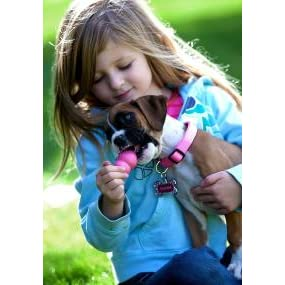 Pet Supplies : Pet Chew Toys : KONG Puppy Kong Toy, Small