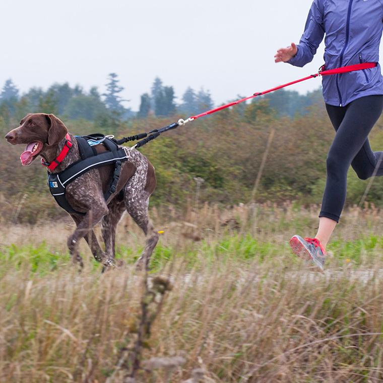 Amazon Canine Equipment Ultimate Pulling Dog Harness Large Rhamazon: Human Harness For Pulling At Gmaili.net