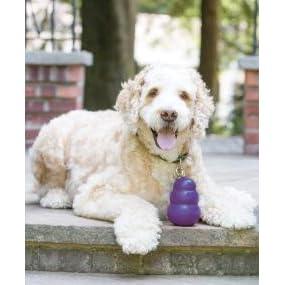 Amazon.com : KONG Senior KONG Dog Toy, Small, Purple : Pet