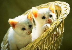 Armarkat Pet Products