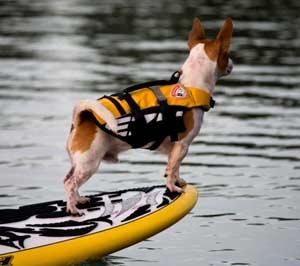 EzyDog Doggy Flotation Device (DFD)