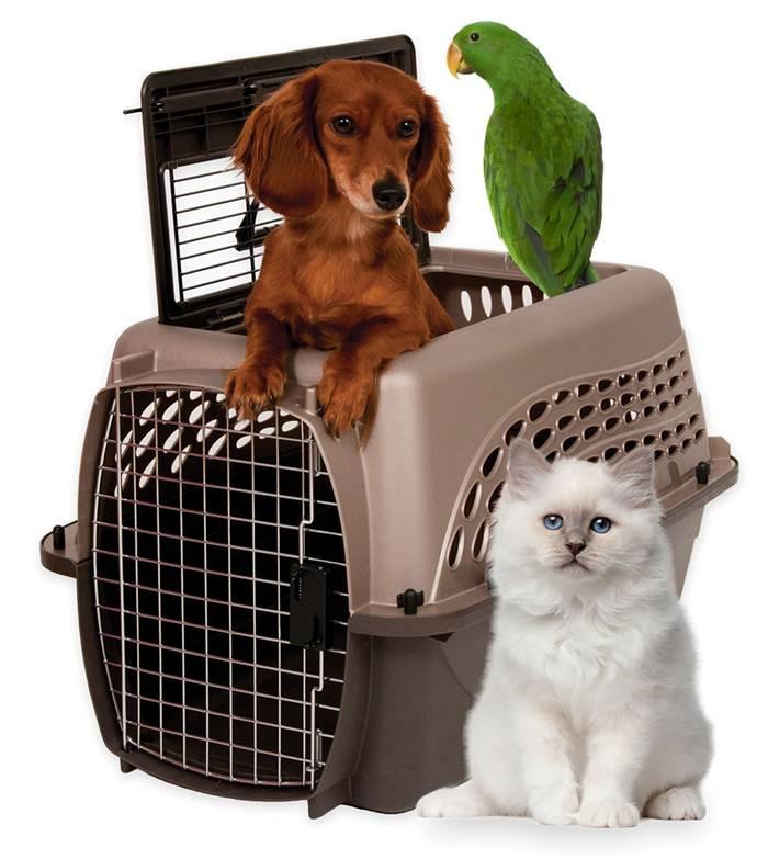 Assembled with dog, bird, cat