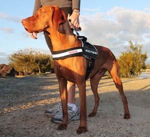 Amazon.com : EzyDog Convert Trail-Ready Dog Harness, Large, Charcoal
