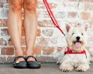 EzyDog Vario 4 Multi-Function Dog Leash