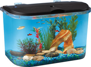 Amazon.com : PanaView 5-Gallon Fish Tank with LED Lighting and Power Filter : Fish Tank : Pet ...