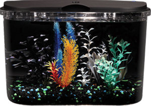 IDEAL AQUARIUM FOR BEGINNERS