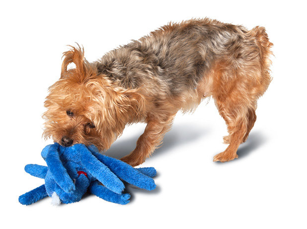 Dog Toy With Four Squeaker In Arms