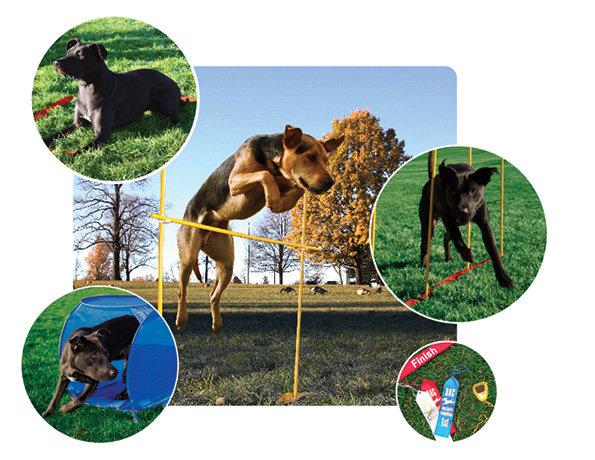 Dog Games by Kyjen