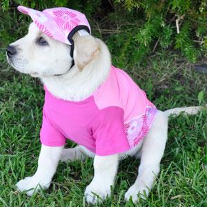 6c0cad96a1f Amazon.com   PlayaPup Sun Protective Dog Visor