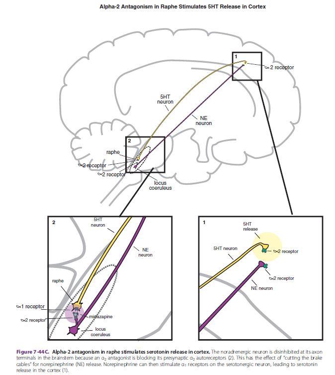 stahl essential psychopharmacology 4th edition pdf