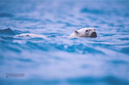 Bible Illuminated: Polar bear
