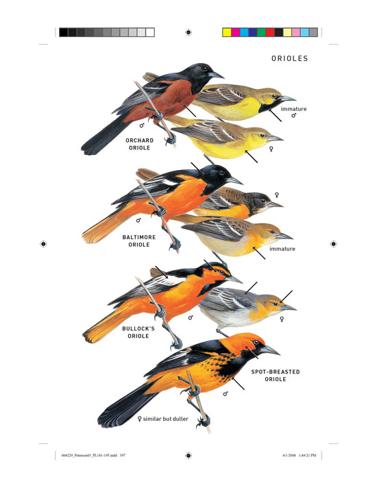 peterson field guide to birds of north america peterson