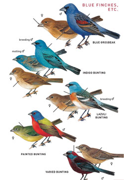 The guide east middle birds the download of to field