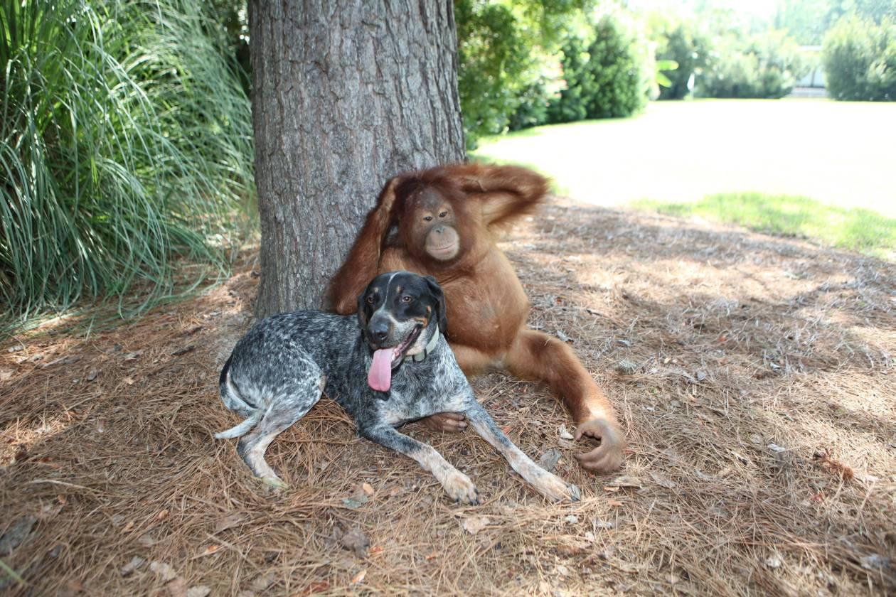 historias conmovedoras de animales