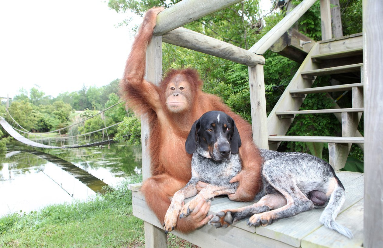 monkey and dog friendship