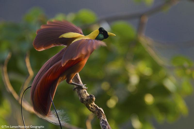 Amazon Com Birds Of Paradise Revealing The World S Most