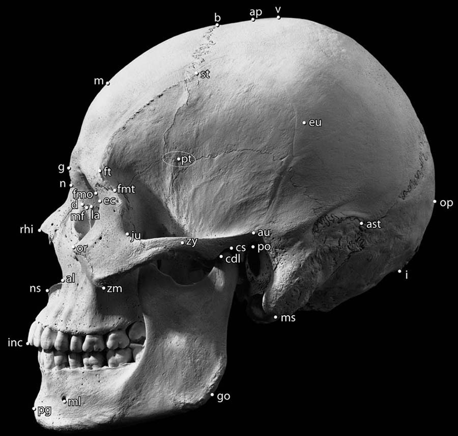 Human Osteology: 9780123741349: Medicine & Health Science Books ...