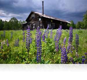 Landscape photo of purple flowers shot using the AF-S NIKKOR 20mm f/1.8G ED lens