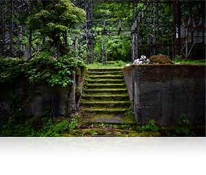 Low light overgrown steps shot with the AF-S NIKKOR 20mm f/1.8G ED lens