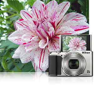 Nikon A900 photo of a flower inset with the camera and the same image on its tilted LCD showing off the LCD