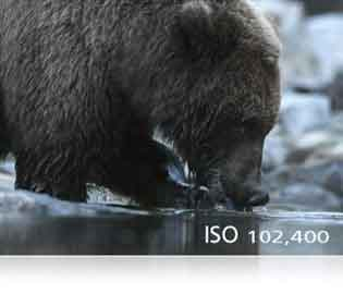Nikon D5 DSLR example photo of a bear showing high ISO range