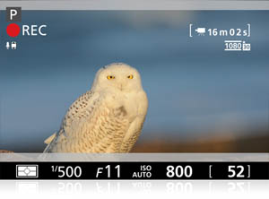 photo of an owl with the overlay of shooting information shot by the D600