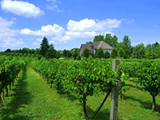 Vineyard Tour, Wine Tasting, and Wine Seminar