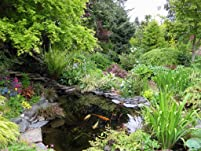 Plants and Supplies: $30 or $50 to Spend or Garden Consultation
