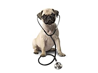One-Year Veterinary Discount Plan