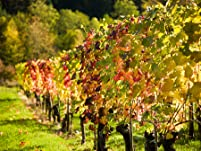 2015 Wine Pass for Two to Over 80 Wineries